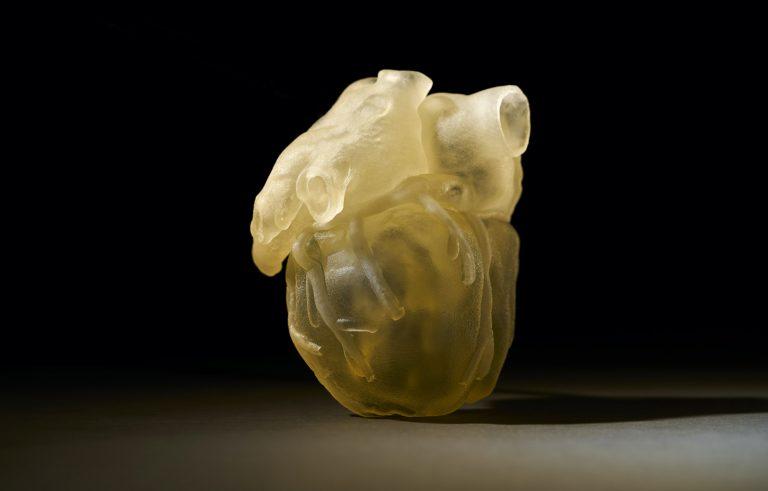 Anche gli organi si stampano in 3D