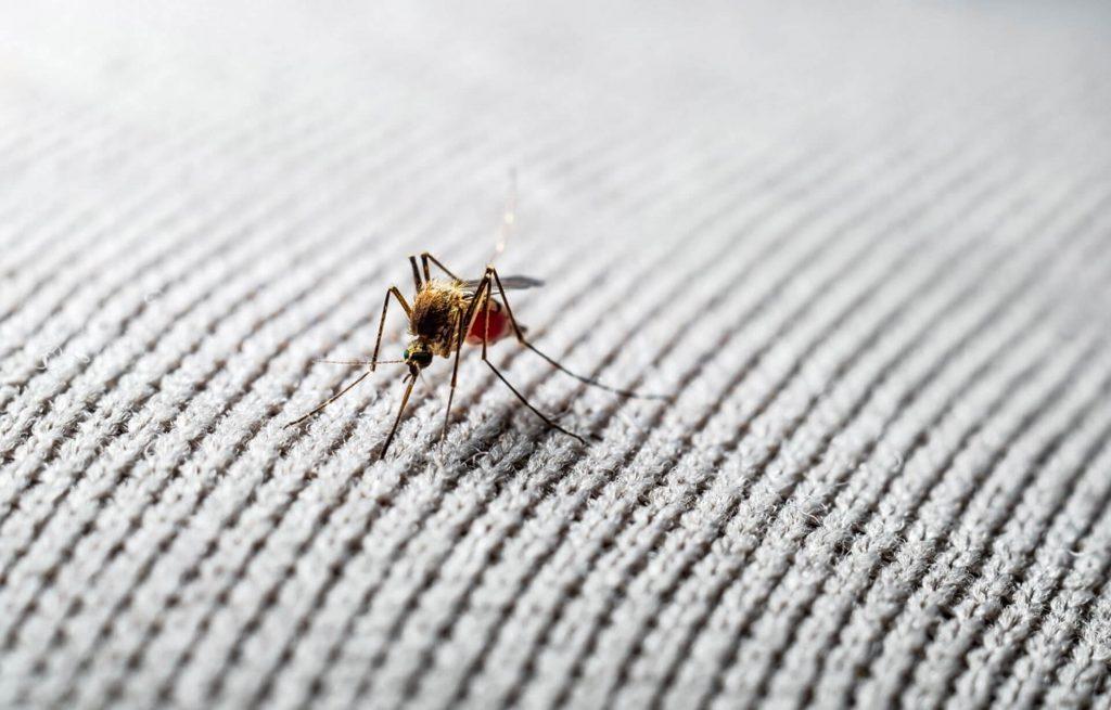 zanzare grafene futuro