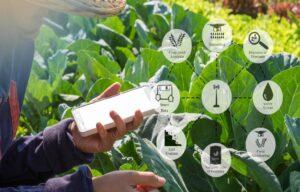 Un orto verticale, ecco l'agricoltura 4.0